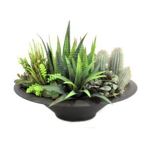 Agaves & vetplanten
