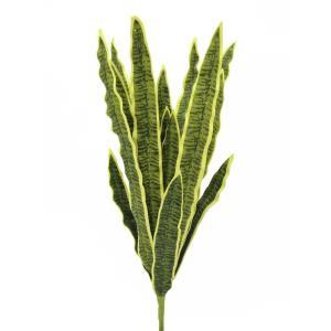 82530577-Europalms Sansevieria (EVA)